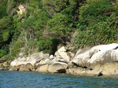 Abel Tasman Nat'l Park 25