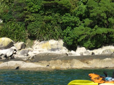 Abel Tasman Nat'l Park 24 -  Tonga Island