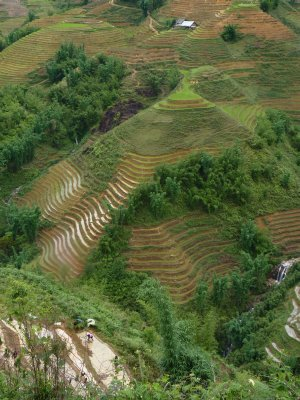 Rice terraces of Sapa