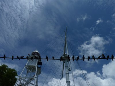 Birds in the sun - Fort Cornwallis, Penang