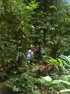 Trekking through thick jungle