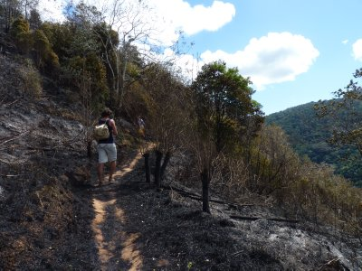 Hiking through the recently burnt landscape