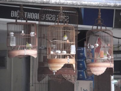 Caged Birds in Hanoi