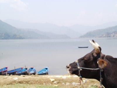Nepal_005_..ara_002.jpg