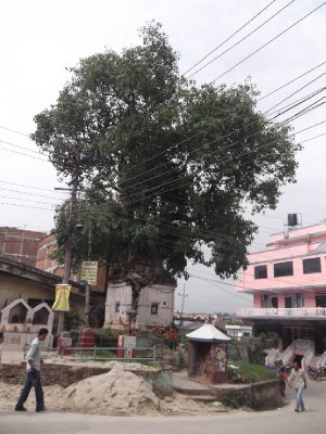 Tree growing out of Temple