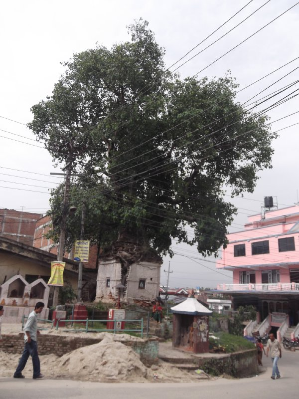 large_Nepal_010_..ath_002.jpg