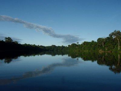 Tambopata (Peruvian Amazon)