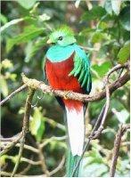 Resplendent_Quetzal.png