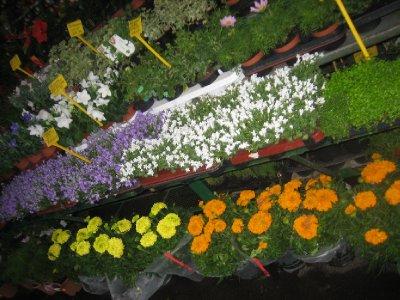 so many beautiful flower EVERYWHERE