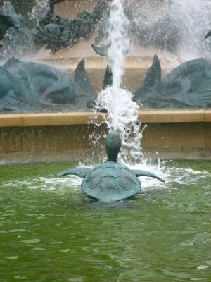 turtle in the fountain!