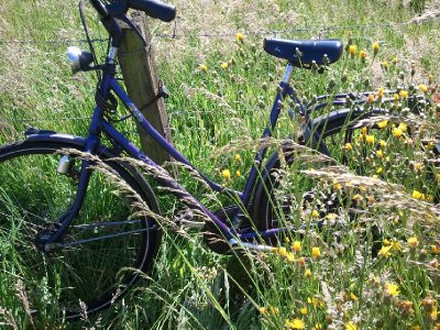 2012-05-28 bike in a field of flowers by the beach