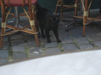 evasive chat noir