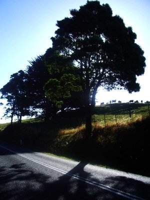 Tree on side of road with shadow