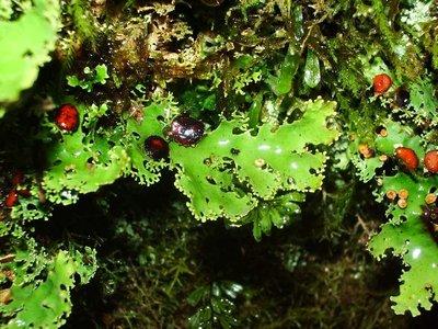 Lichen moss stuff