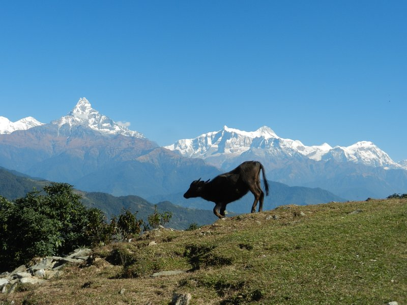 View of Annapurna Range from Panchase Trek