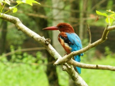 large_Kingfisher.jpg