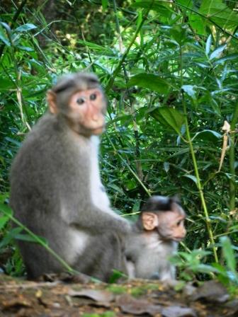 large_Monkey_and_baby.jpg