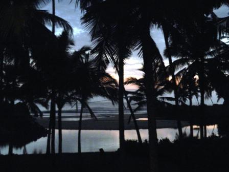 large_Palm_sunset.jpg