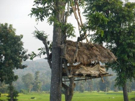 large_Treehouse.jpg