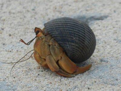 mollusc_crab.jpg
