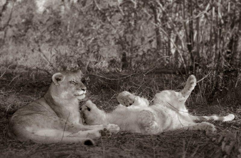 Cubs play