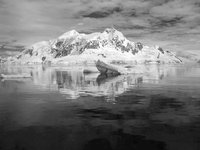Paradise Harbor, Antarctica: Ice Bergs and Mountains