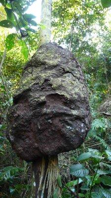 Giant termite nest