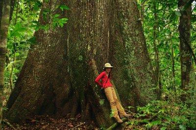 Bridget and a giant Mapa'ho tree