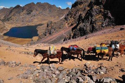 Our Horse train