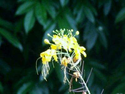 Yellow Bud Flower