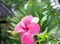 Pink Petals part II