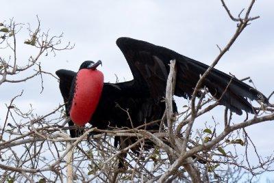 Galapagos-136.jpg