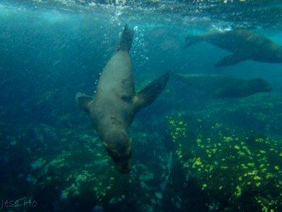 Galapagos-160.jpg