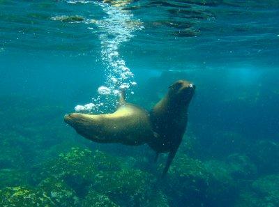 Galapagos-166.jpg