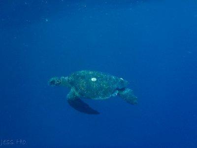 Galapagos-188.jpg