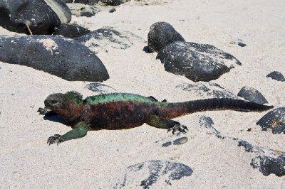 Galapagos-210.jpg