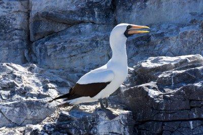 Galapagos-214.jpg