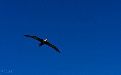 Galapagos-220.jpg