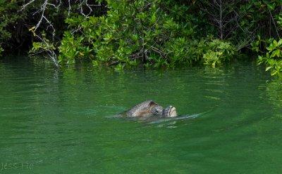 Galapagos-4.jpg