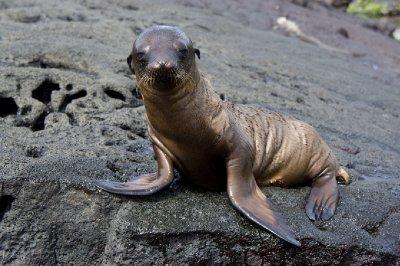 Galapagos-91.jpg
