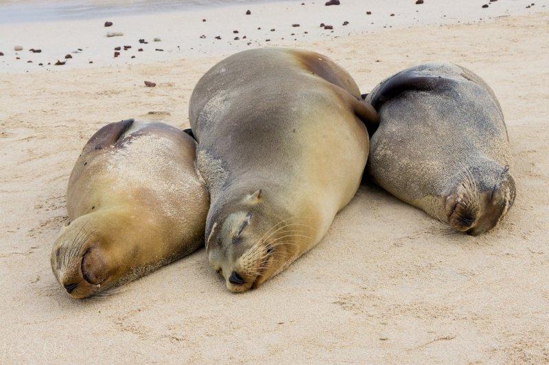 large_Galapagos-180.jpg