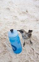 thumb_Galapagos-205.jpg