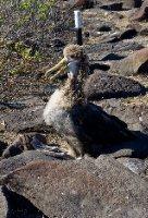 thumb_Galapagos-228.jpg