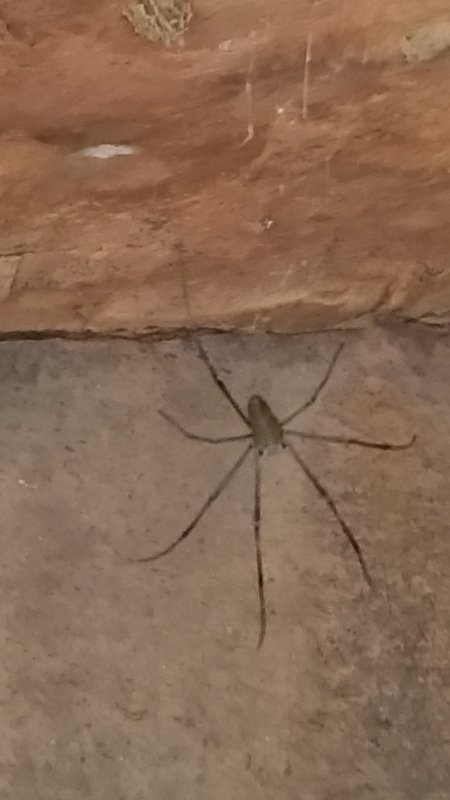 large_26_Cave_Spider.jpg