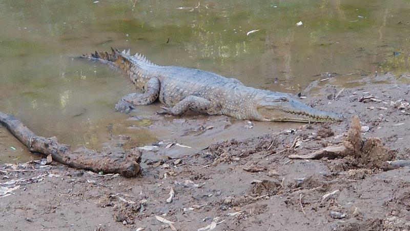 large_5_Crocs.jpg