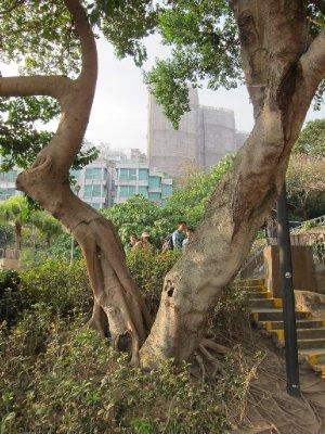 香港淺水灣