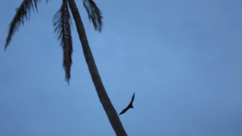 Bat @ Mana