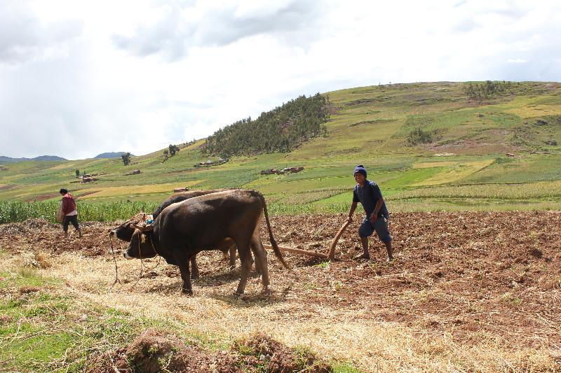 Plowing in Huarocondo