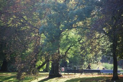 2vond_trees