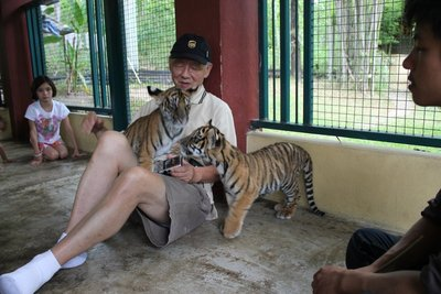 Ko, covered in tiger cubs